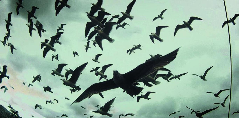 Couverture du film Leviathan