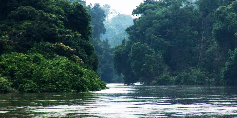 Couverture du film L' Hypothèse du Mokélé-Mbembé