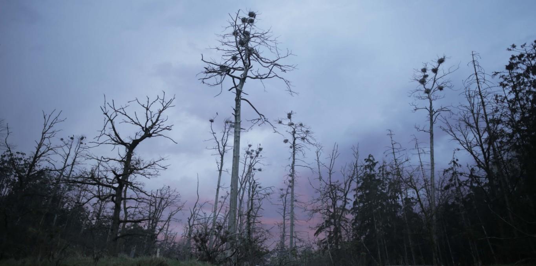 Couverture du film Acid Forest